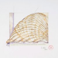 Rüganer Schatzkiste, 20 x 20 cm