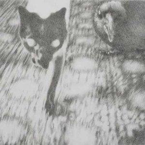 Katze_EWE9606_web.jpg